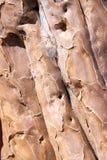 Textur av skället av darrningträdet Royaltyfria Bilder