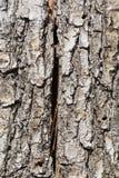 Textur av skället av ett gammalt träd med en spricka royaltyfri fotografi