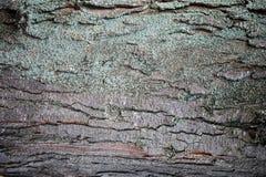 Textur av skället av ett träd, abstrakt bakgrund Arkivbild