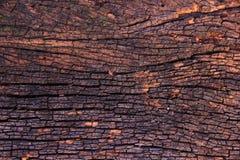 Textur av skällträ Arkivfoto