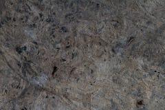 Textur av skällträ Royaltyfria Bilder