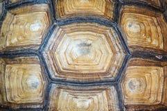 Textur av sköldpaddaryggskölden Arkivfoton