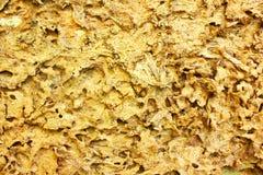 Textur av skadat trä för termit Arkivfoton