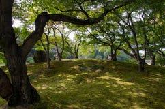 Textur av skugga av den Okayama trädgården (Korakuen) Royaltyfri Foto