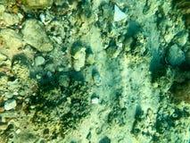 Textur av stenar, jord, havsbotten med korallrever och alger under blått grönaktigt vatten, undervattens- sikt av havet, havet i  royaltyfria foton