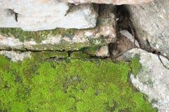 Textur av textur av mossa på tegelsten Arkivfoton
