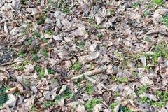 Textur av torra leaves Arkivfoton