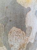 Textur av trädjournalen Royaltyfria Bilder
