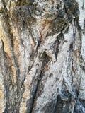 Textur av trädjournalen Arkivbild