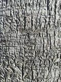 Textur av trädjournalen Arkivfoton