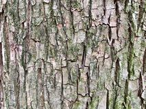Textur av trädskället, lite gräsplanmossa arkivbild