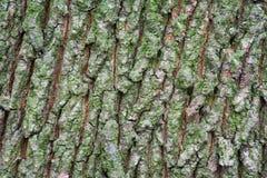 Textur av trädskället med gräsplaner Royaltyfri Fotografi