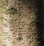 Textur av trädskället med modeller Arkivfoto