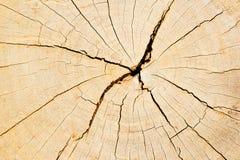 Textur av trädstubben Arkivfoto