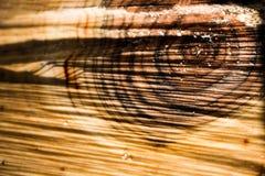 textur av trät, årliga cirklar Arkivfoton