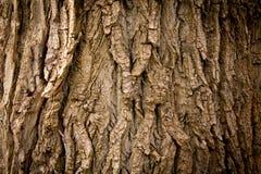 Textur av treen Royaltyfri Bild