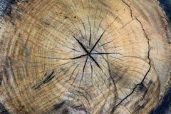 Textur av treestubben Fotografering för Bildbyråer