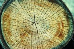 Textur av treestubben Sågad timmerträbakgrund royaltyfri fotografi