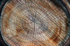 Textur av treestubben Sågad timmerträbakgrund arkivbilder