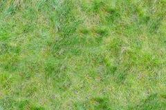 Textur av tunt gräs Royaltyfria Foton