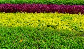Textur av växter Fotografering för Bildbyråer