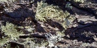 Textur av vaggar med svampar arkivbild