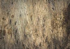 Textur av wood bruk för skäll Royaltyfri Foto