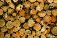 Textur av wood journaler för träd som abstrakt naturlig bakgrund Royaltyfri Fotografi