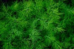 Textur bakgrund av grön havsväxt arkivbild