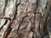 Textur-bakgrund för trädskäll bild fotografering för bildbyråer
