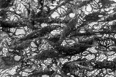Textur bakgrund, modell Tyg av svart snör åt Bakgrundsnolla royaltyfri foto