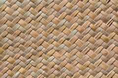 Textur dalle piante secche Fotografia Stock Libera da Diritti