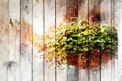 Textur dekorativa växter för samkopiering i krukor av den torkade kokosnötkanten royaltyfri foto