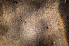 Textur för bäverbräde Royaltyfria Bilder