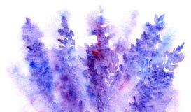 Textur för bakgrund för abstrakt begrepp för blomning för vattenfärglavendelblomma Arkivfoto