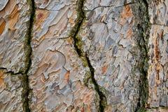 Textur för bakgrund för trädskäll Royaltyfri Fotografi