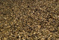 textur för bakgrund för helg för turister för skal för strand för solhavssemester Arkivfoto