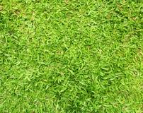 textur för bakgrundsgräsgreen royaltyfri foto