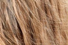 Textur för blont hår, bakgrund arkivbild