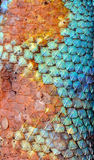 Textur för drakehudmodell Royaltyfria Bilder