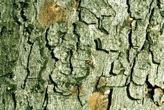Textur för färgträdskäll Arkivfoto