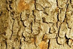 Textur för färgträdskäll Royaltyfria Bilder