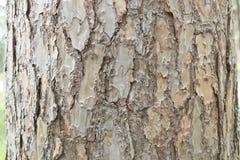 Textur för foto för trädskäll för bakgrundsnatur Fotografering för Bildbyråer