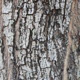Textur för foto för trädskäll för bakgrundsnatur Arkivbild