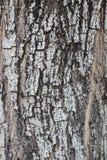 Textur för foto för trädskäll för bakgrundsnatur Royaltyfri Fotografi