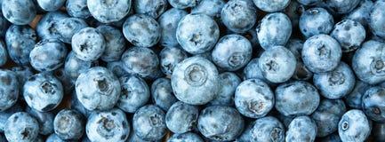 textur för frukt för bakgrundsblåbär ny Blåbärtexturslut upp Arkivfoto