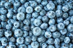 textur för frukt för bakgrundsblåbär ny Blåbärtexturslut upp Arkivfoton