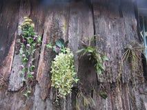 Textur för gammal bakgrund för bakgrund gammal Wood med växttextur med växter Royaltyfri Fotografi