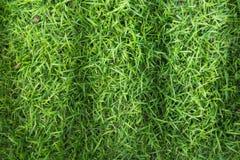Textur för gräsfält för golfbana, fotbollfält eller design för sportbakgrundsbegrepp royaltyfri bild