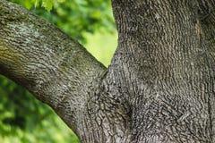 Textur för gräsplan för grå färger för trädstam Arkivbilder
